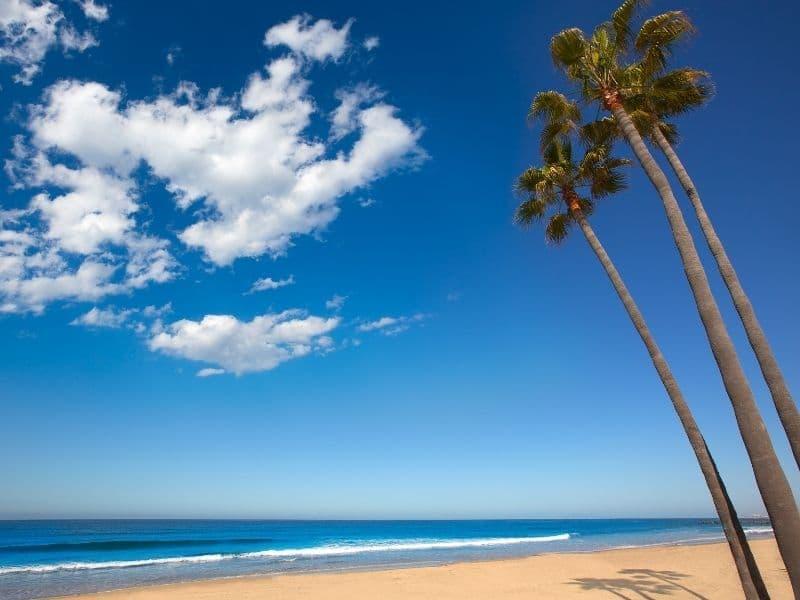 newport beach palm trees